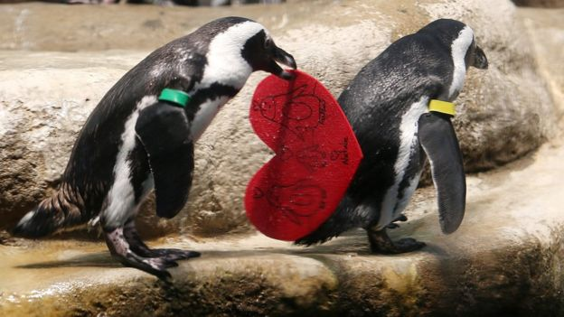 Penguins Valentine's Day