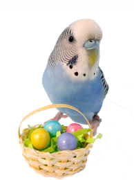 easter parrot