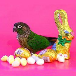 Easter Wielkanoc Angielski Wrocław