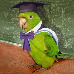 The Teachers' Day - Dzień Nauczyciela
